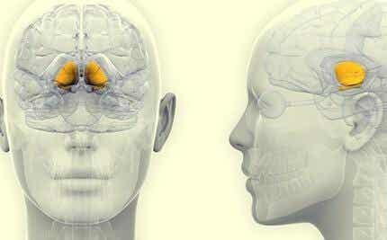 Område i hjerne markeret med gul farve