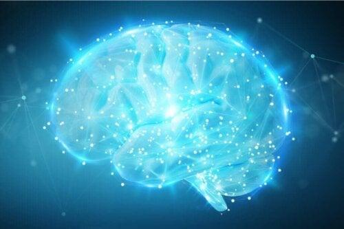En aktiv hjerne lyser op