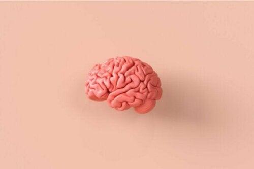 Neuroetik, et fascinerende kig på hjernen og moralsk adfærd