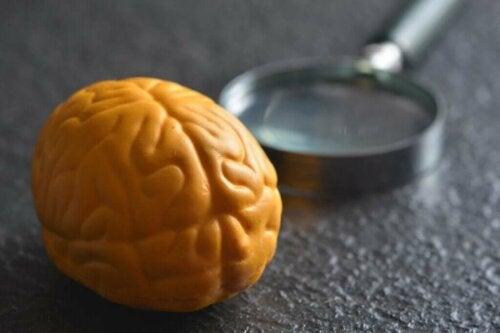 Hjerne og forstørrelsesglas