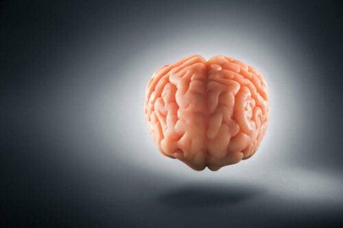 Hjerne svæver