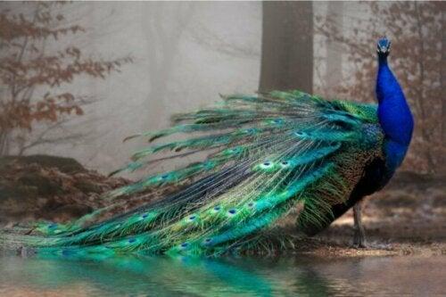 11 af de smukkeste dyr i verden