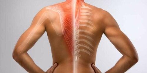 Illustration af en persons ryg
