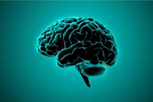 Hvad siger neurovidenskaben om voldelige menneskers hjerner?