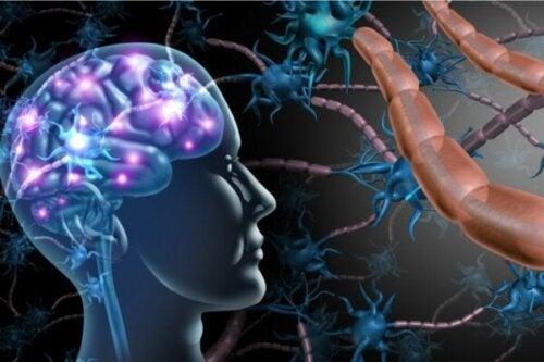Forskellene mellem multipel sklerose og ALS