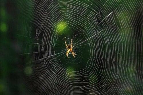 Hvad betyder det, når du drømmer om edderkopper?