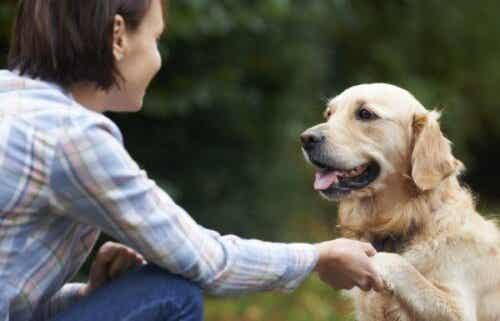 Ved du, om hunde kan genkende ansigter?